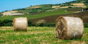 How Many Round Bales Per Acre