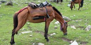 Indian Horse Names