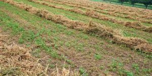 Meadow Hay for Horses