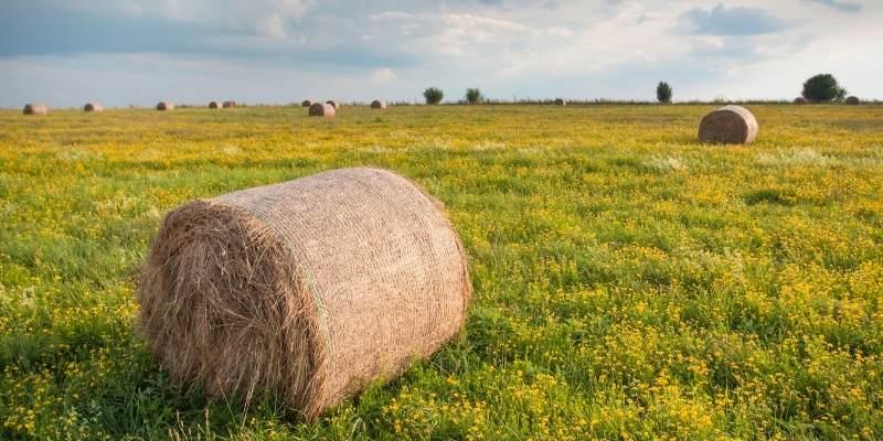 Oaten-Hay