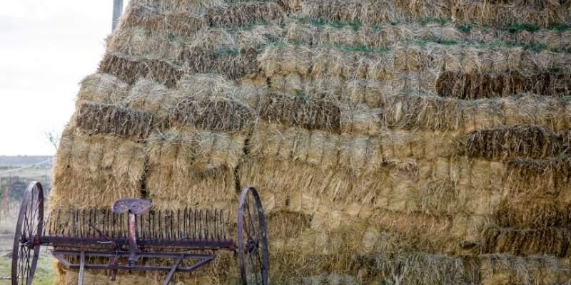 Wheaten-Chaff