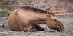 Will a Horse with Colic Poop