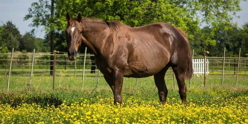 what-is-Broodmare