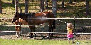 Frontline Spray For Horse